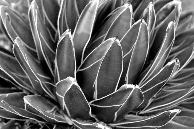 Cactus Swirls