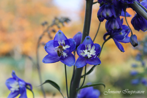 Bee on Violet Flowers
