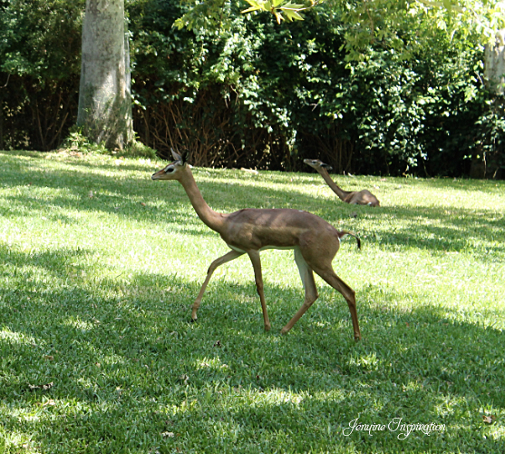 Animal walking in the grass