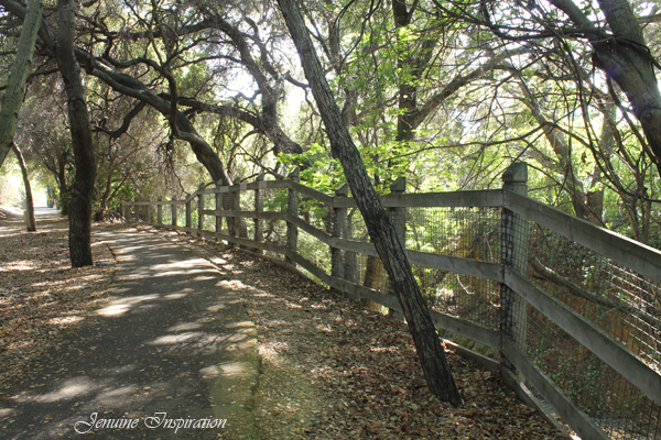 A Nice Trail