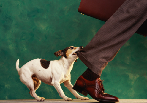 How To Get A Dog To Stop Biting Your Ankles