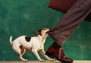 Dog Biting Pant Leg