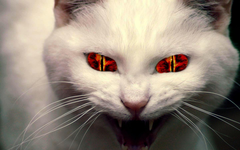 Evil Cat Pictures 49