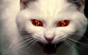 evil-cat