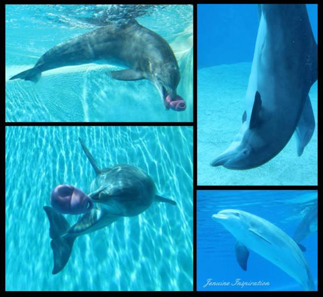 Dolphin Collage