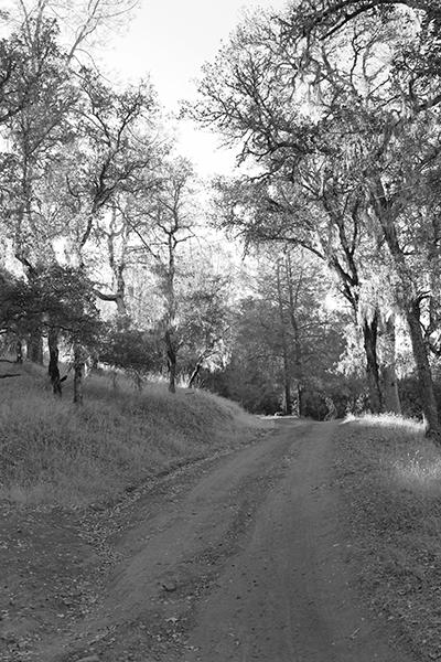Monochrome Trail