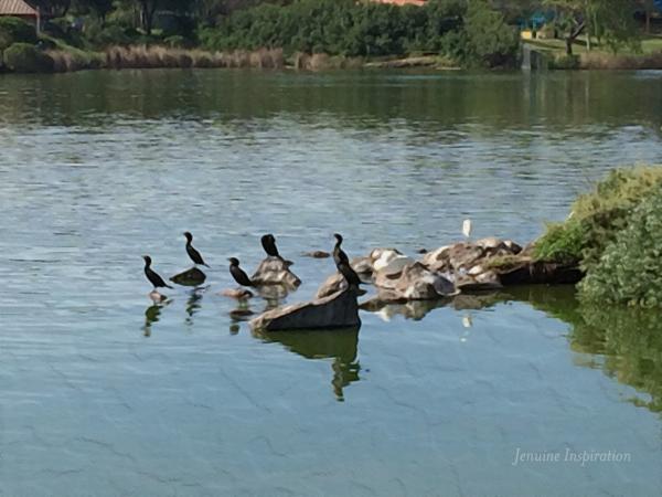 Duck's Island